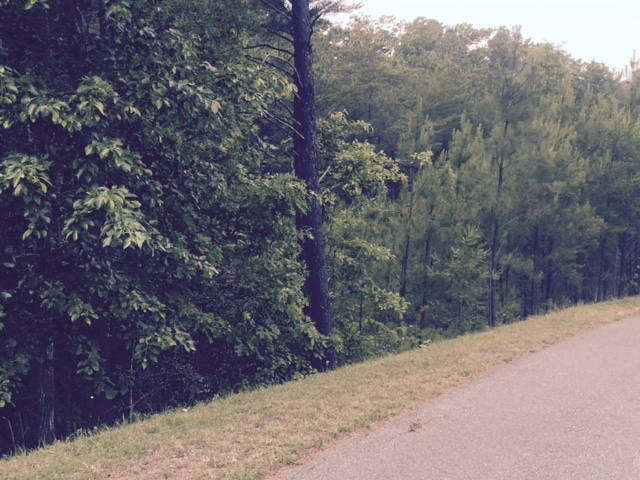 The wooded lot - below tax value and waiting for your dream house